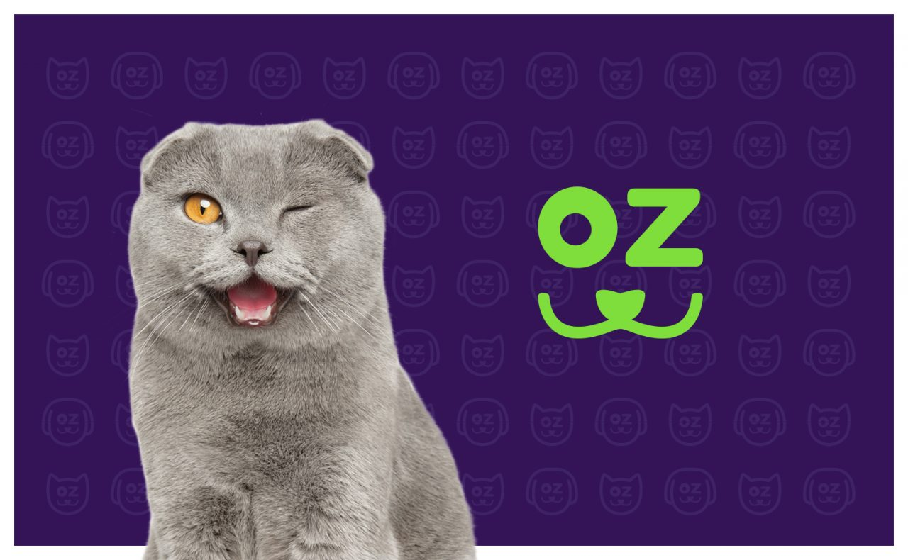 kozoo-cat-assurance-sante-animale-creation-WALA